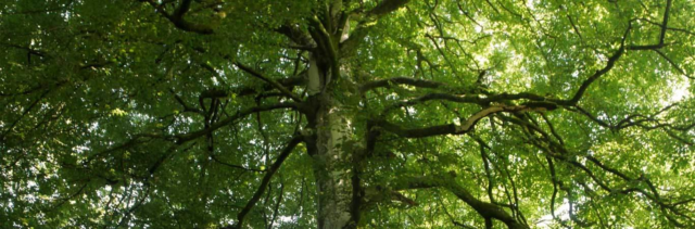 Native Woodland Strategy is Launched Banner Photo