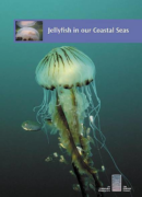 Jellyfish in our Coastal Seas